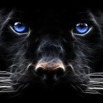 Animal-Wallpaper-Big-cat BP.jpg